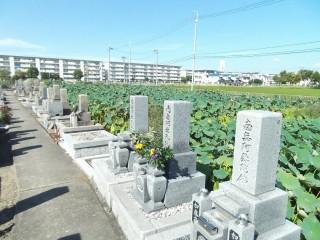 西面共同墓地は、高槻市にあるお墓です